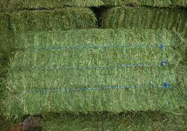 Lucerne bales for sale Brits
