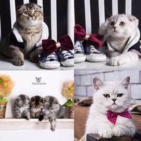 Фотограф для животных фотографирую котов собак