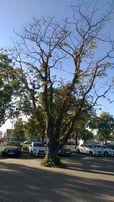 Wycinka drzew i usługi rębakiem