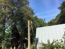 Wycinka drzew tanio profesjonalnie podnosnik koszowy zwyzka