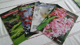 ogrodnictwo rośliny działka kwiaty, kwiaty w domu wiosna w ogrodzie