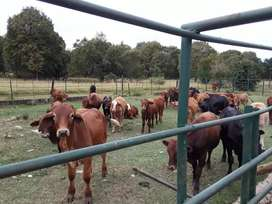Farm/ land wanted to rent for cattle