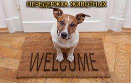 Квартирная передержка домашних животных м. Осокорки