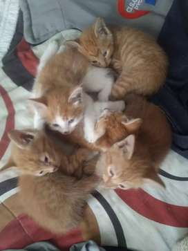Kittens are ready for their new homes