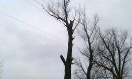 Спил аварійних дерев, валка й кронування та робота з садками