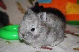 Масенькие мини кролики ждут вас