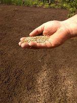 Посев газонной травы. Рулонные газоны