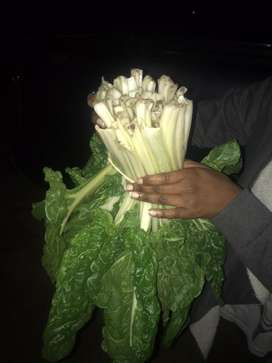 Spinach Bundles for sale
