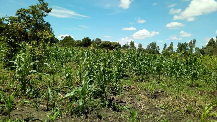 6acres of land in mukono-kabimbiri good for all agriculture all at 20m 0