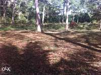 Land for sale 5acres near sesse gateway beach 0