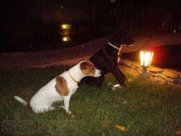 Гостиница для собак, отель для собак, передержка собак Киев
