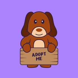 Looking to adopt a dog