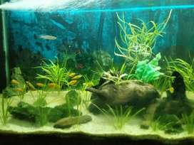 1.2M FISH TANK FOR SALE