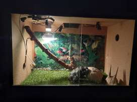 Wooden cage for small to medium sized Bearded dragon