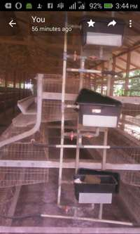 Used FACCO Poultry Cages 0