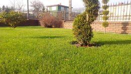 Drenaże opaskowe ,odwodnienia terenu,przydomowe oczyszczalnie,trawniki