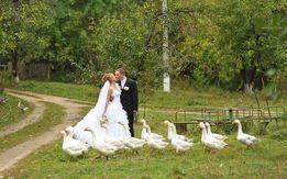 Свадебный фотограф, репортаж, предметная съемка, выпускные, аэросъмка
