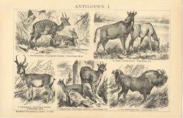 ANTYLOPY, NOSOROŻCE, KRÓLIKI oryginalne XIX w. grafiki na ścianę