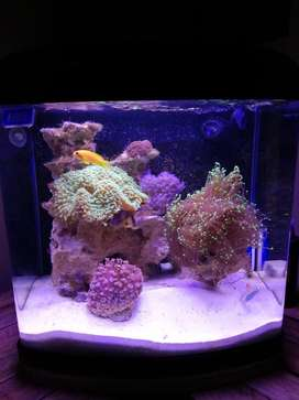 80L marine aquarium for sale