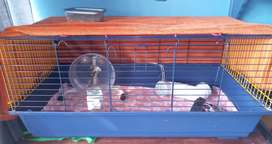 Large cage for hamster, hedgehog or bunny with accessories for sale