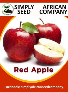 Red Apple Seeds