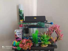 10L Fish tank with all the extras!