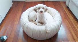 Luxury Pet Bed - Upcycled