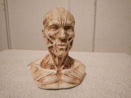 Экорше, голова Гудона, статуэтка, живопись.