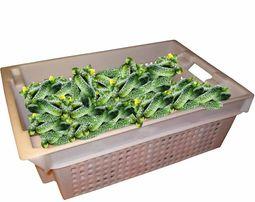 Ящики для овощей фруктов яблок молока мяса рыбы грибов ягод колбас кур