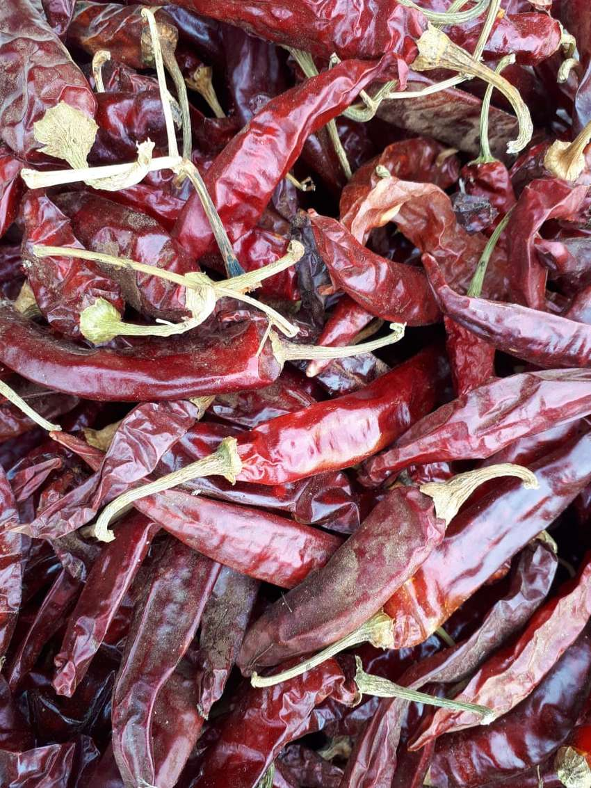 Bulk Buy - Dried Red Chillies all the way from Groot Marico 0