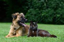 Передержка собак и кошек