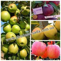 Саженцы яблони, груши от производителя опт и розница более 65 сортов.