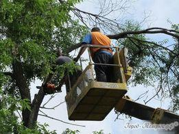 Дрова колотые Спил деревьев Вывоз мусора