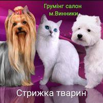 Грумінг (стрижка собак)