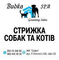 """Стрижка собак та котів """"Budka Spa""""grooming salon"""
