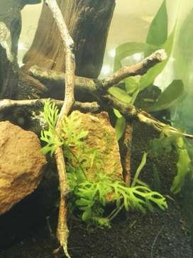 Aquarium plants for Sale! Only R9