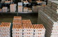 Image of Fresh and Big Brown Table Chicken Eggs