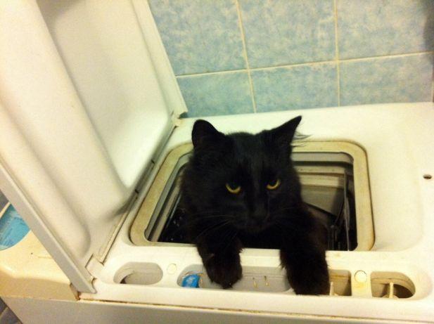 Ремонт стиральных, посудомоечных и сушильных автоматических машин Киев - изображение 1