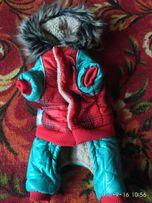 Продам зимний комбез для чихуахуа, йорков
