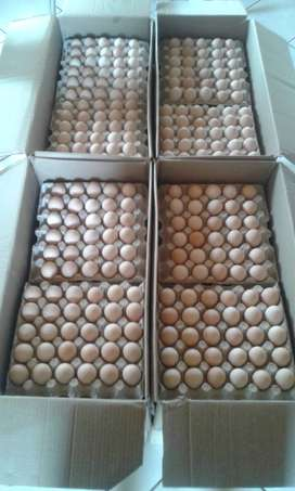 Broiler hatching fertile eggs for sale. Fresh Fertilized eggs.