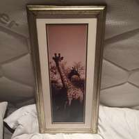 Image of Photo of Giraffes; 28cm wide x 58cm high; cepia