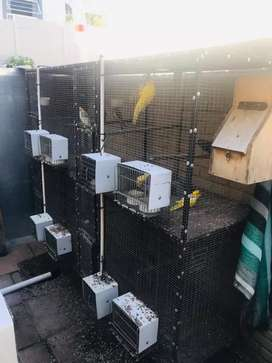 Breading cages