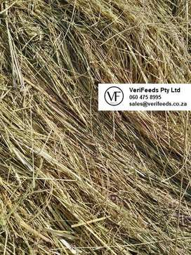 Eragrostis (Oulands gras) square bales for sale