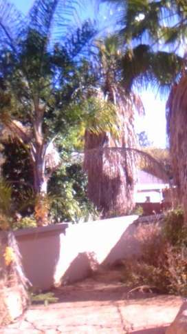 Palm trees for sale increase the value of your home.