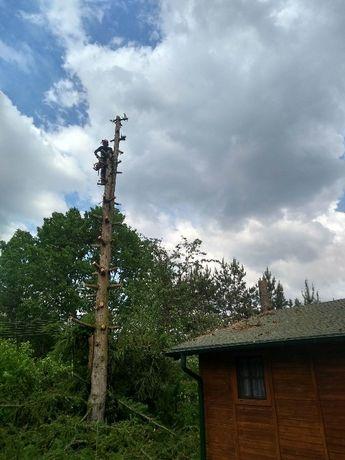 Podlaskie,Wycinka drzew - Usługi alpinistyczne Wysokie Mazowieckie - image 2