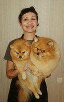 Стрижки грумминг собак и котов