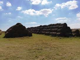 Bales grass for sale