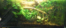 Duży zestaw roślin - kilkadziesiąt sztuk kilkanaście gatunków