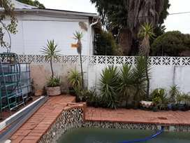 Palm Tree plants in pots. Assorted height. R5 per cm.