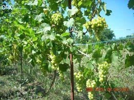 обрезка, формовка сада, виноградника